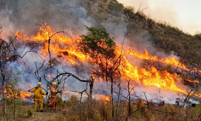 Discuten proyecto para proteger terrenos de incendios intencionales