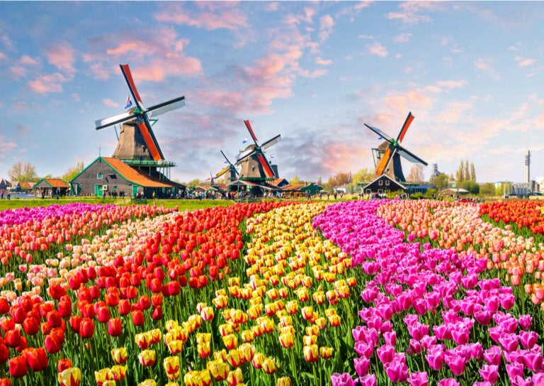 tulipanes02.jpg