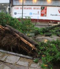 Fuertes vientos causaron destrozos