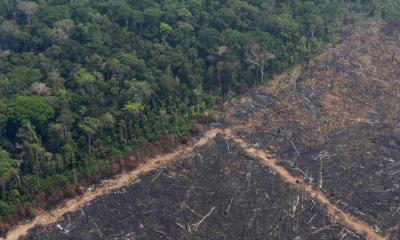 Aún en cuarentena, se desmontaron más bosques que en 2019