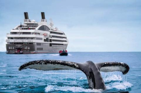 crucero lgbtq.jpg