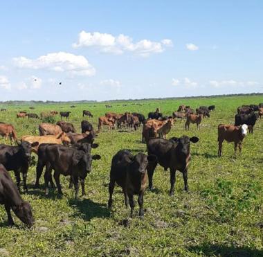 vacas-pasto.jpg